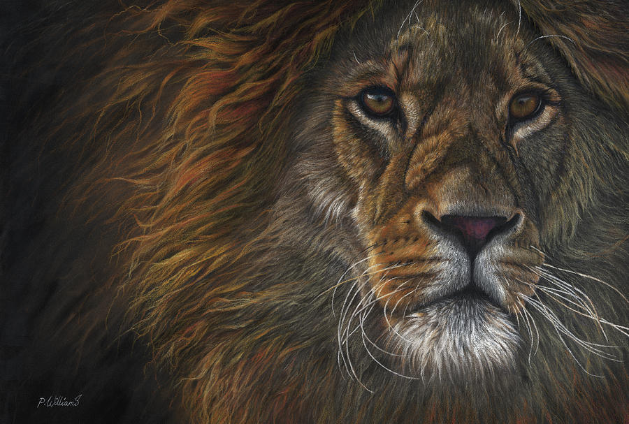 Valiant - African lion portrait by Peter Williams