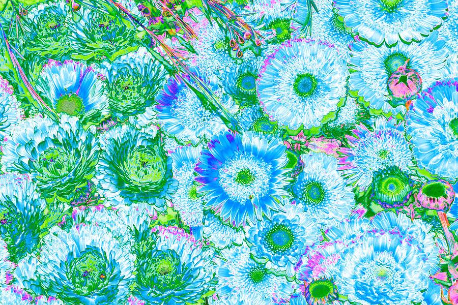 Van Goghs Garden Photograph