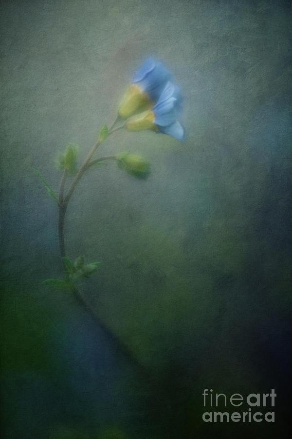 Blue Photograph - Vanishing by Priska Wettstein