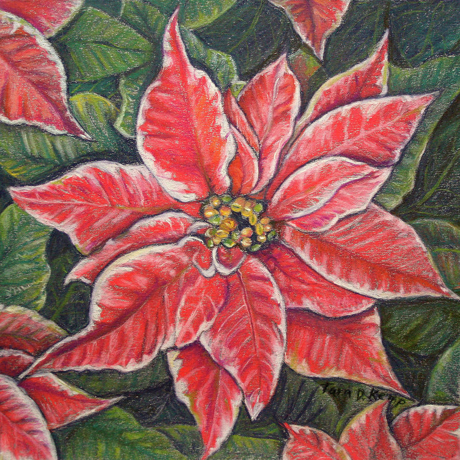 Variegated Poinsettia by Tara D Kemp