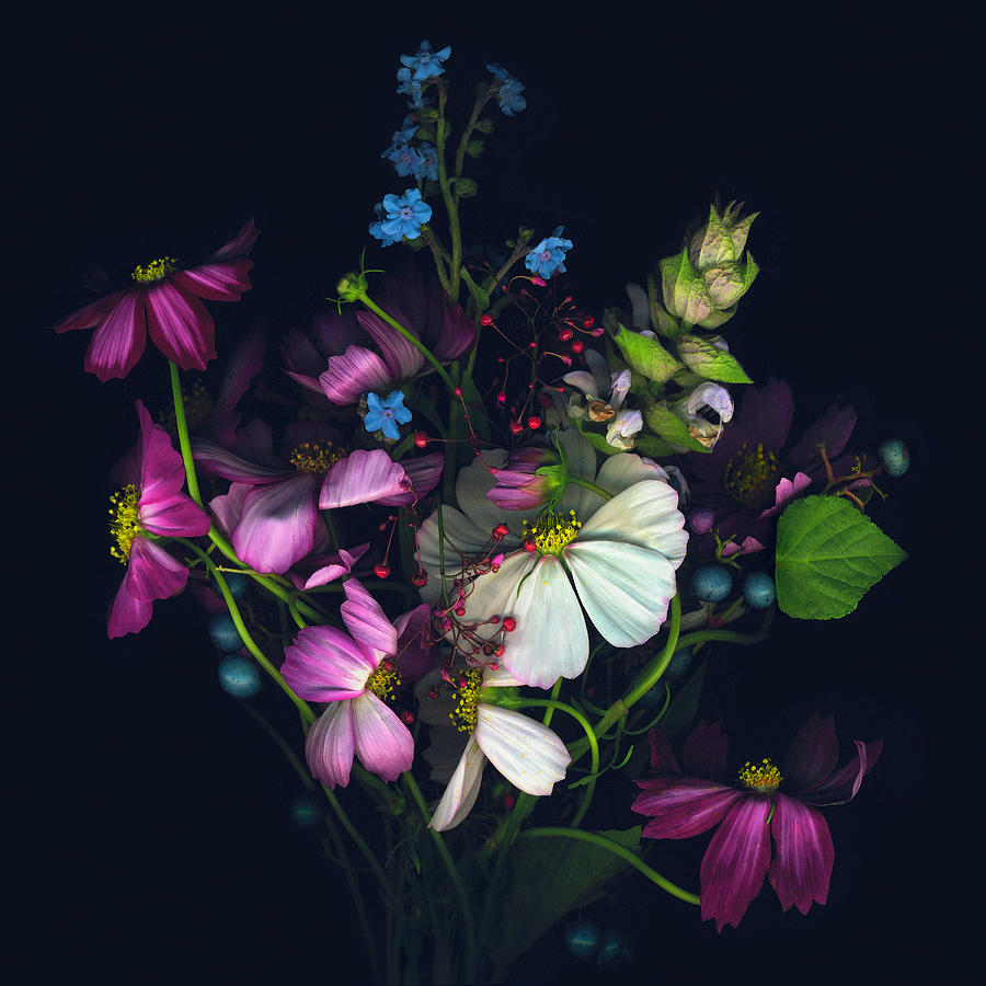 Variety Of Flowers Against Black Photograph by John Grant