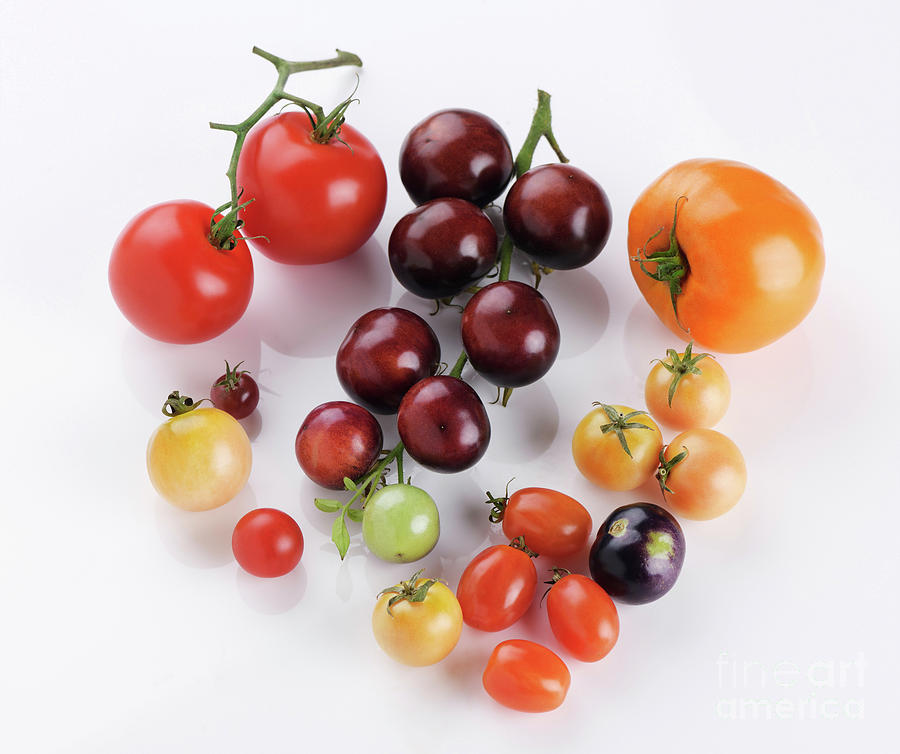 Variety Of Organic Heirloom Tomatoes Of Different Sizes And Colo