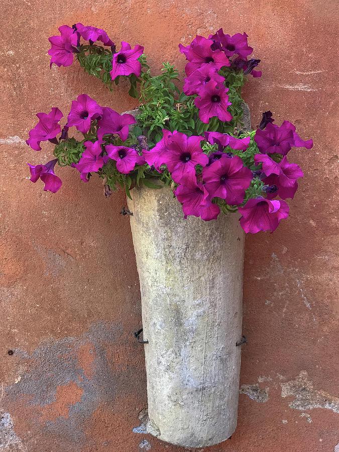 Italia Photograph - Vase by Joseph Yarbrough