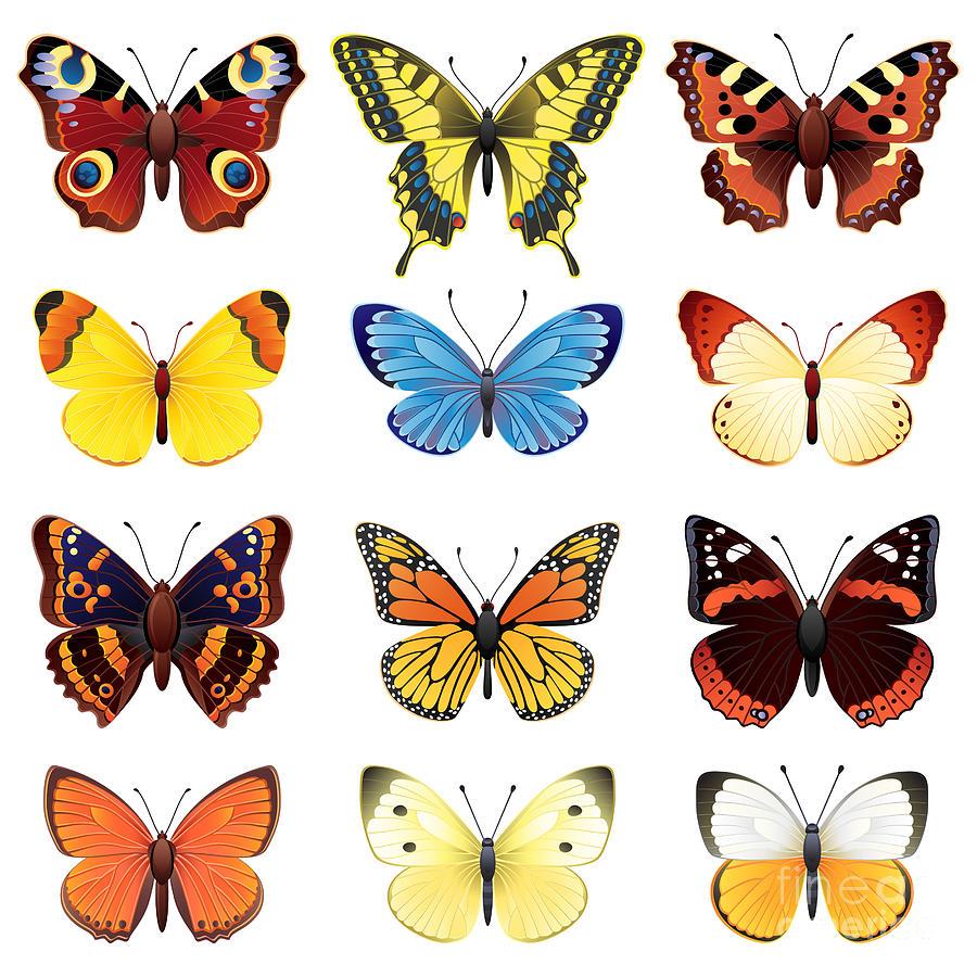 Symbol Digital Art - Vector Illustration - Butterfly Icon Set by Jut