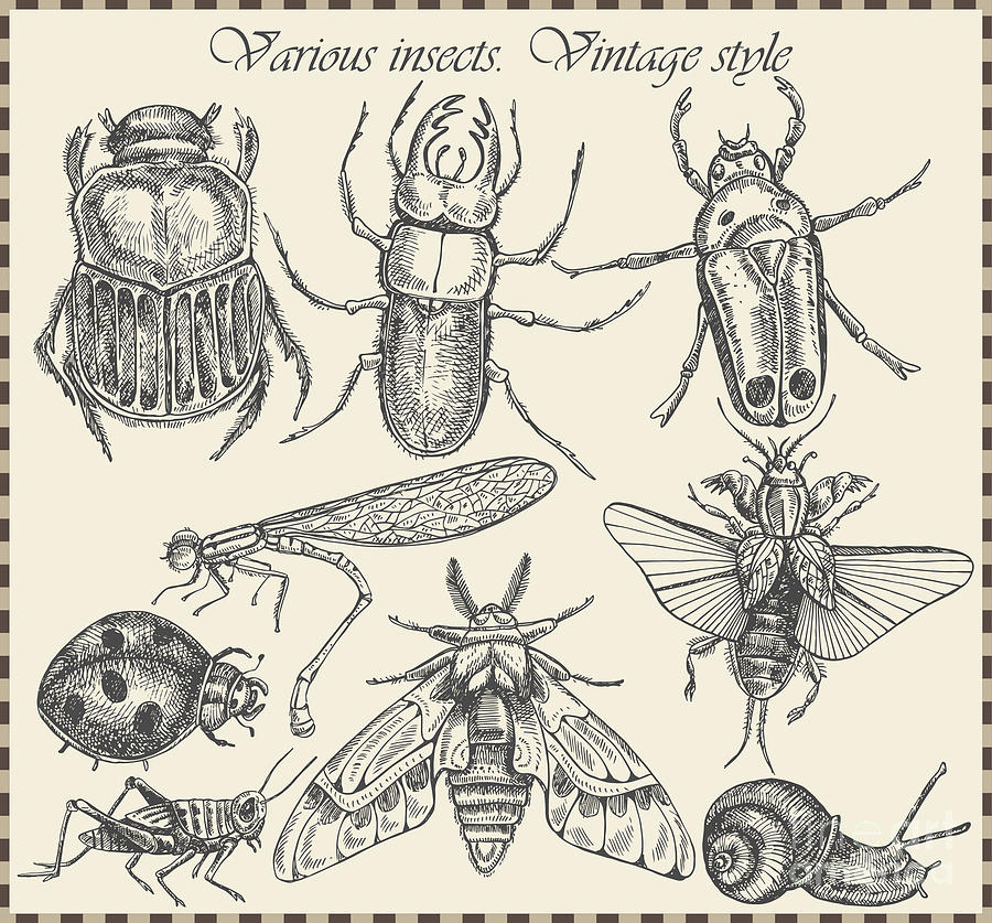 Engraving Digital Art - Vector Set Insects In Vintage Style by Horg