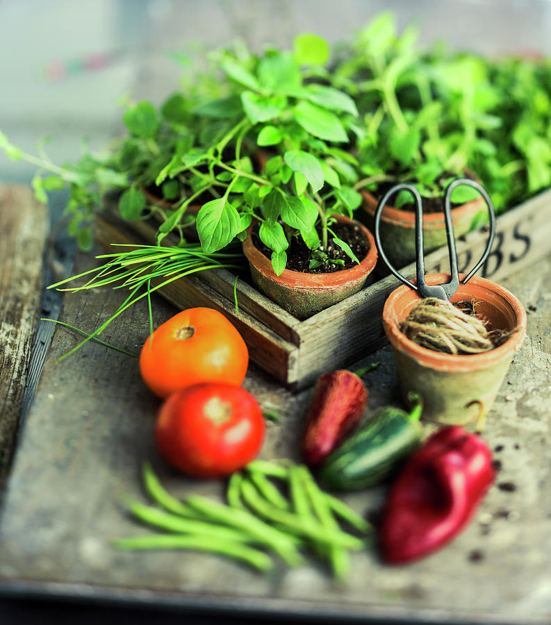 Vegetables And Herbs Photograph by Thepalmer