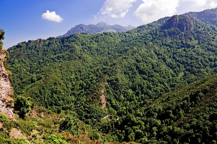 Vegetated Mountains In Eastern Corsica Photograph by Fcremona
