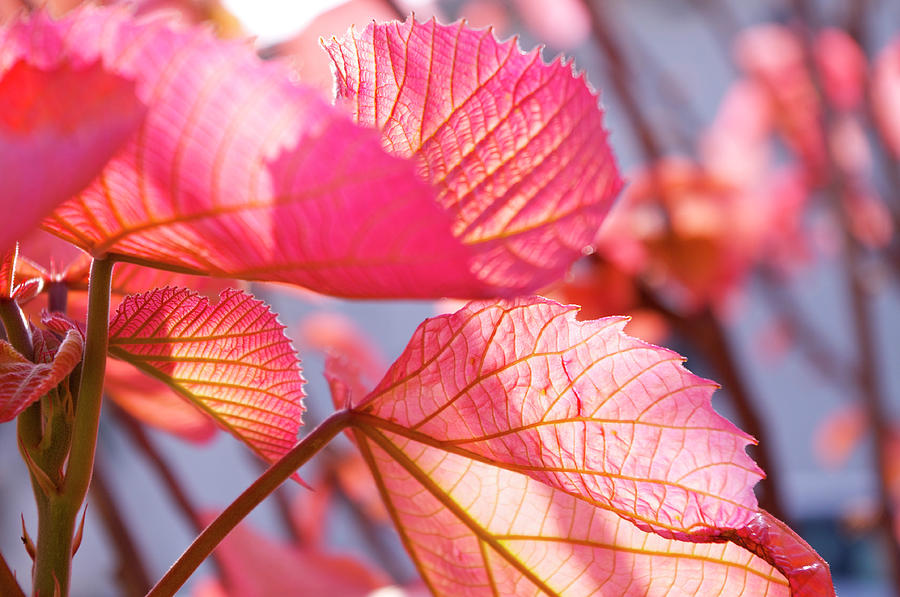 Vein Photograph by Photograph Shino Ono (lechat8)