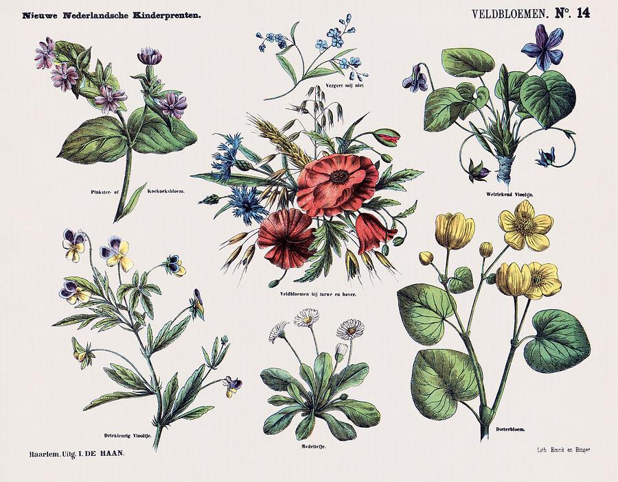 Veldbloemen by Ruth Moratz