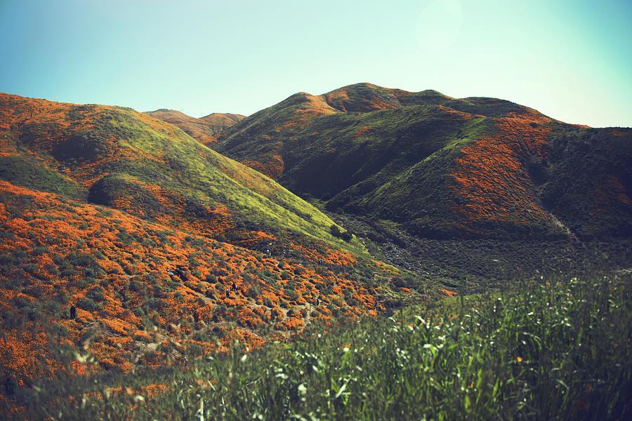 Poppies Photograph - Velvet Hills by THiRDiPHOTO