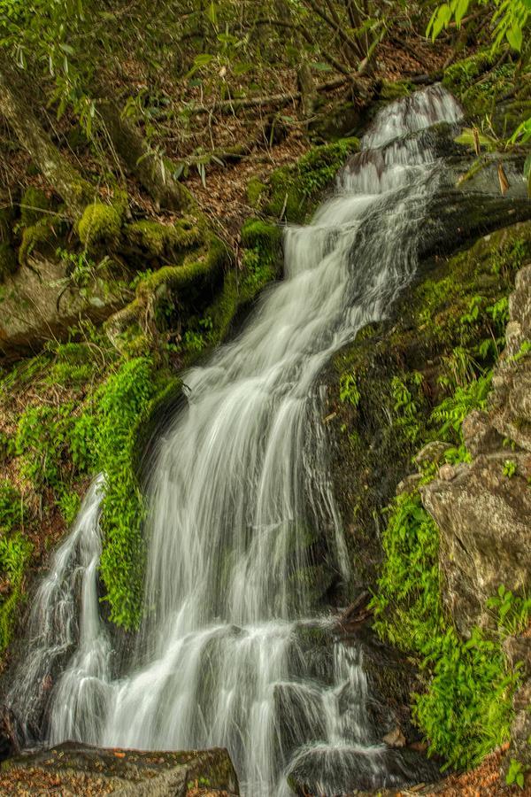 Velvet in the Forest by Dana Foreman