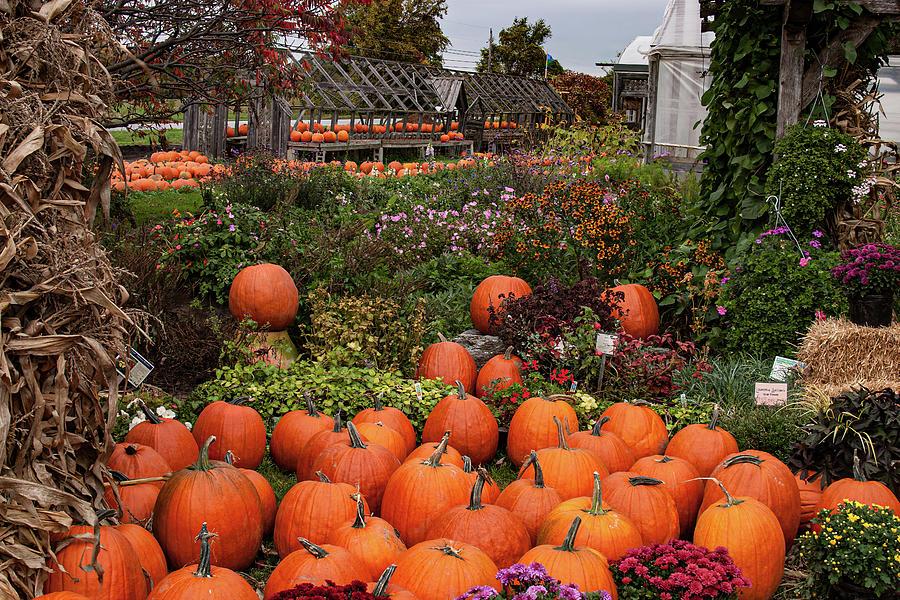 Vermont Farm Stand Pumpkins by Jeff Folger