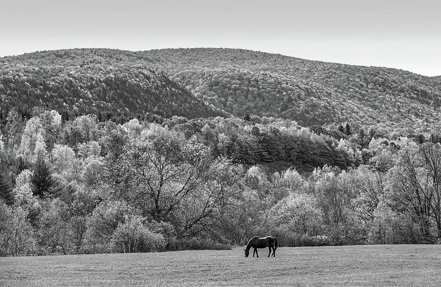 Vermont Horse and Fall Trees Manchester Vermont Field Black and White by Toby McGuire