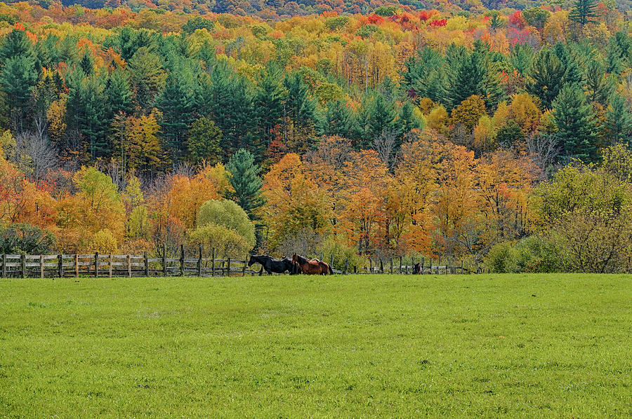 Vermont Horse and Fall Trees Manchester Vermont Field Fence by Toby McGuire