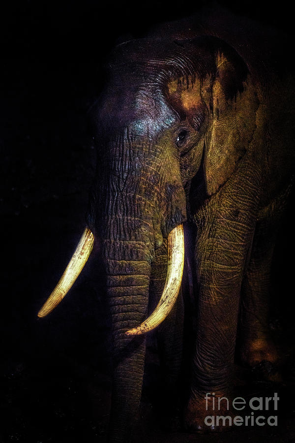 Vertical Of Majestic African Elephant Photograph by Vicki Jauron, Babylon And Beyond Photography