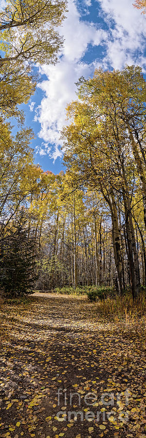 Vertical Panorama of Changing Aspens in the Fall - Twin Lakes San Isabel National Forest Colorado by Silvio Ligutti