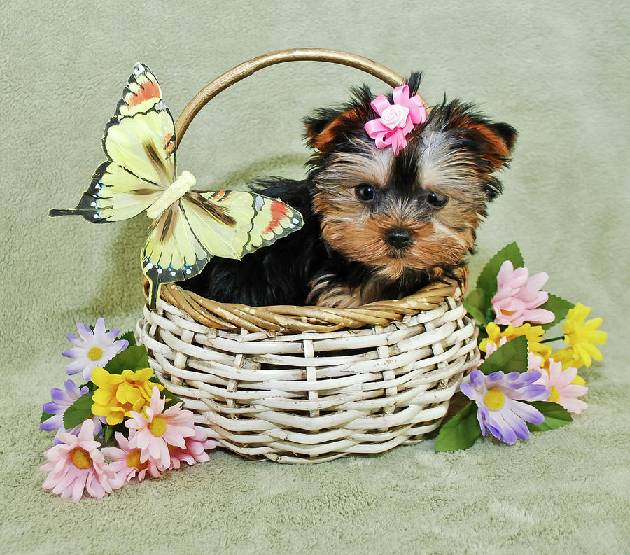 Very Cute Puppy Photograph by Stockimage