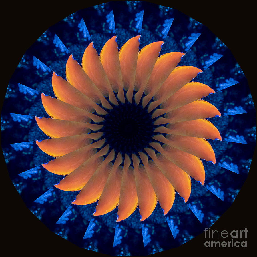 Original Work Photograph - Vibrant Sun by Susan Rydberg