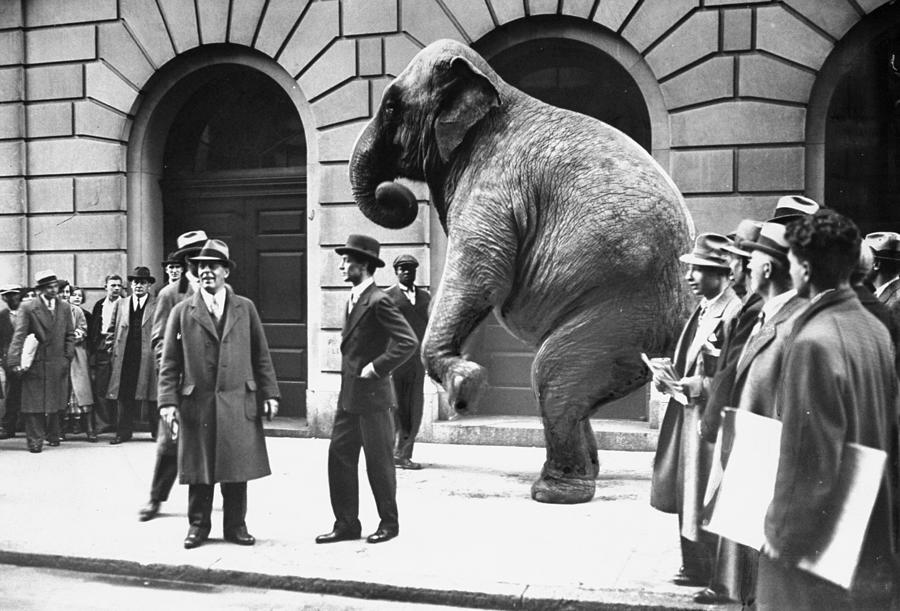 Victory, The G.o.p. Elephant, Stands In Photograph by New York Daily News Archive