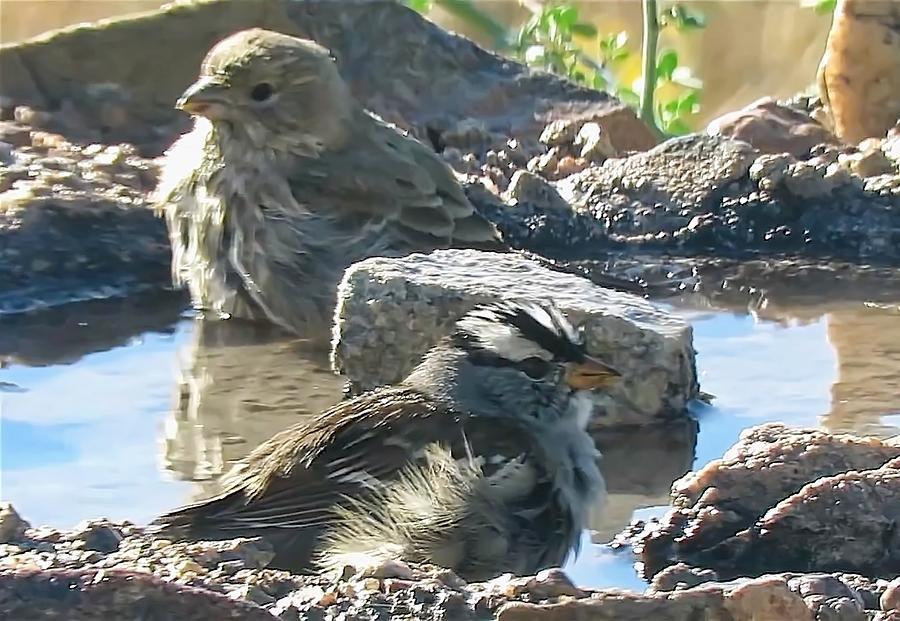 Videoed Birds Bathing by Judy Kennedy