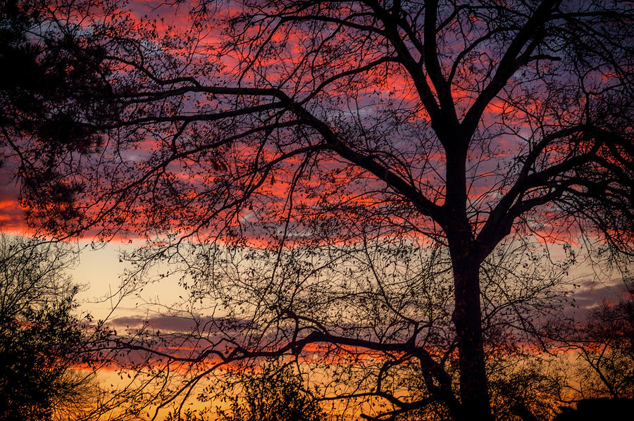 Tree Silhouette Photograph - View From The Back Door #1 by Susan Callaway