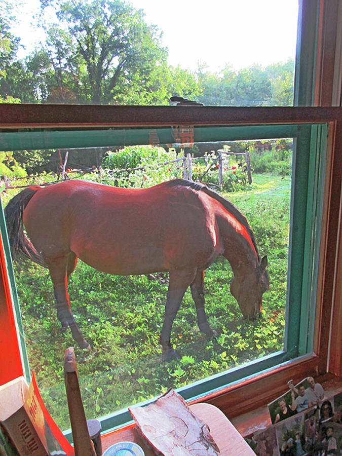 View From The Farm House Window by Patricia Keller