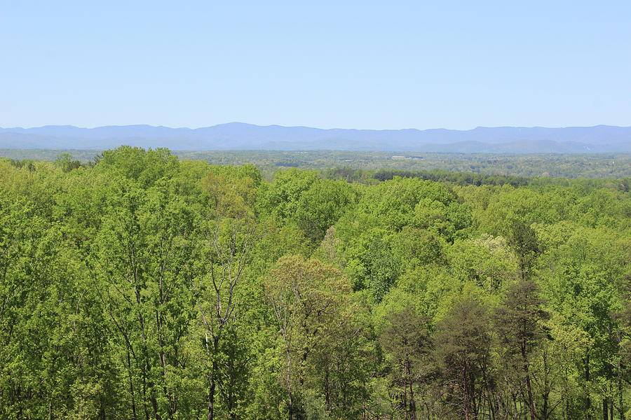 View Of Blue Ridge From The Vineyard by Cathy Lindsey