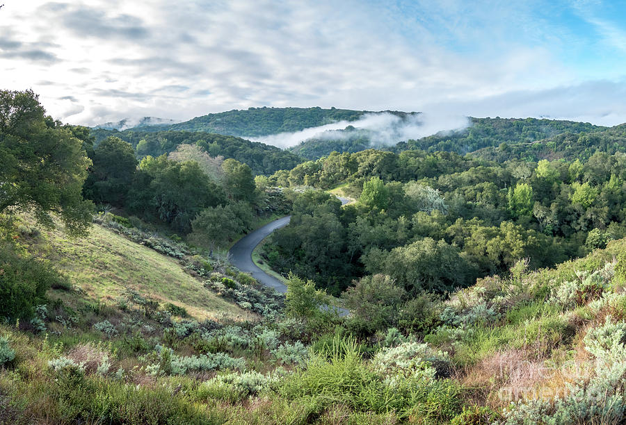 California Photograph - View Of Curved Road Through Dense Forest Area With Low Clouds Ov by PorqueNo Studios