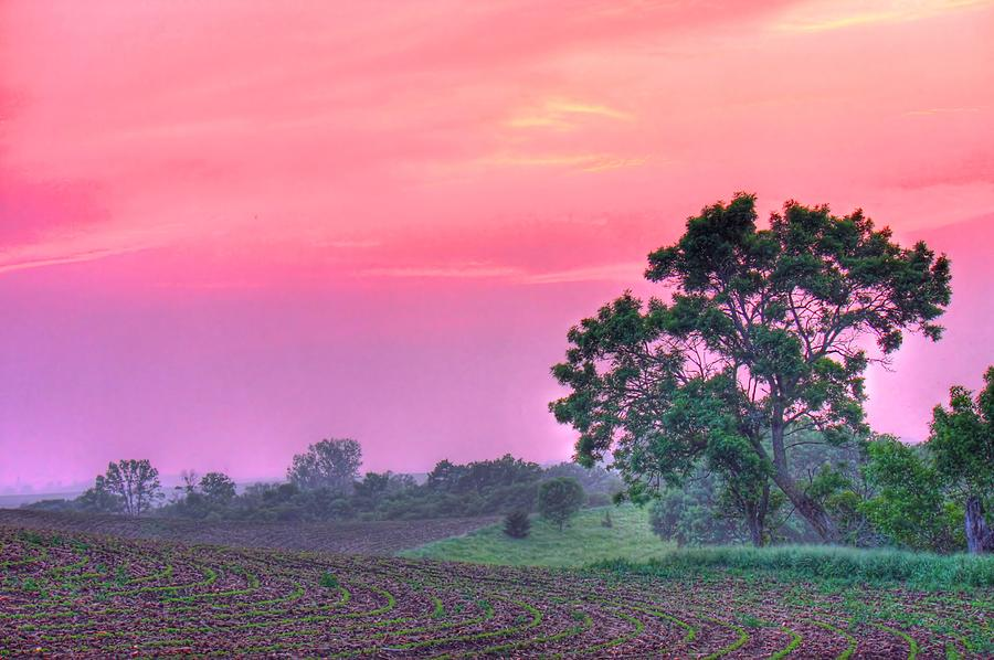 View Of Farmland Photograph by Images By Mazz