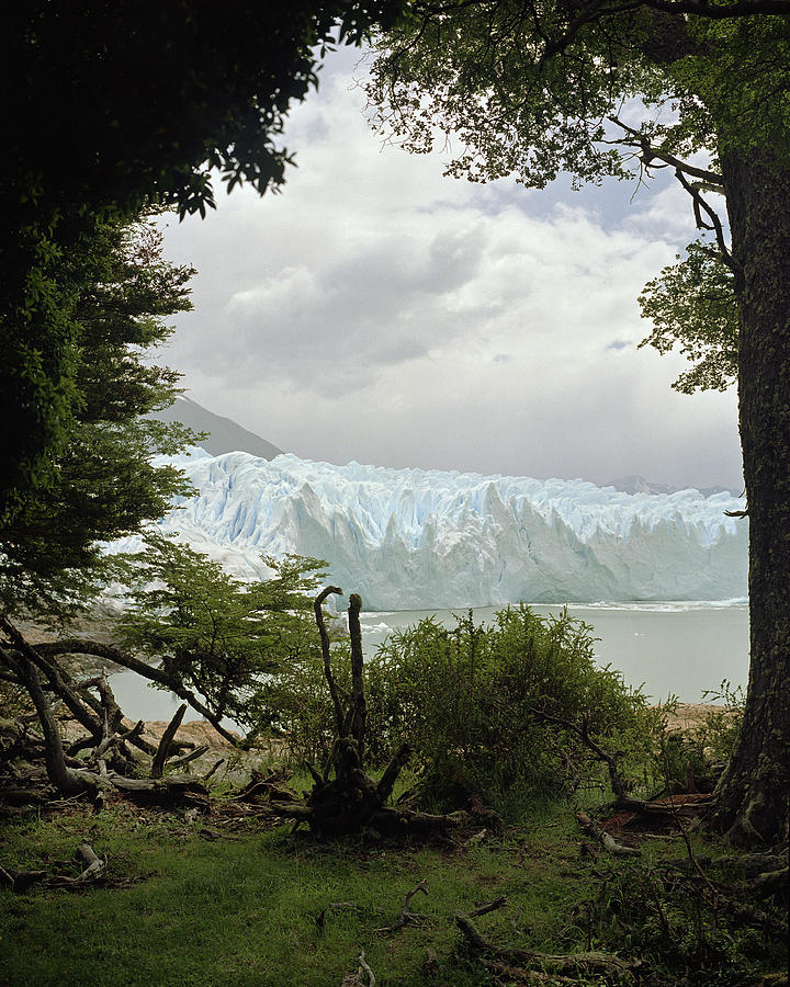 View Of Iceberg Through Trees Photograph by Michael Blann