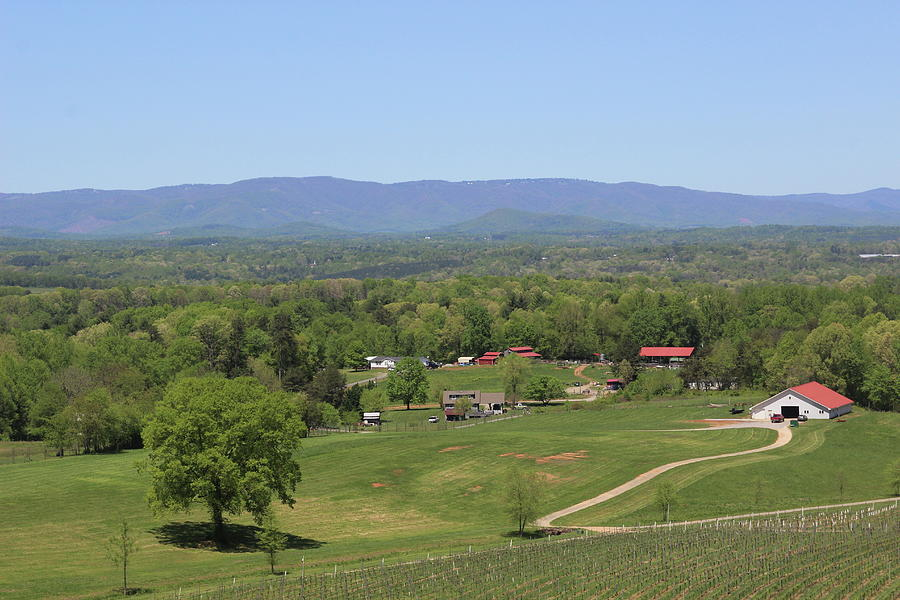 View Of The Blue Ridge From The Vineyard 5 by Cathy Lindsey