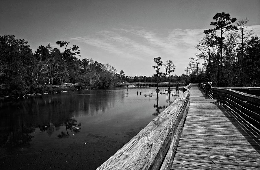 View the swamp from a wooden boardwalk. by Timothy Pinckard