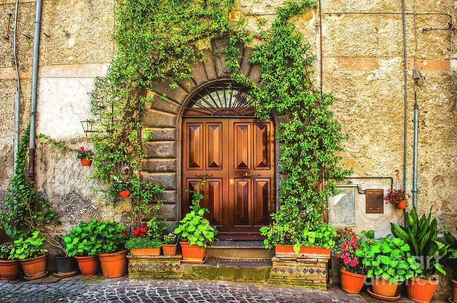 vine plant on an italian house door  by Luca Lorenzelli