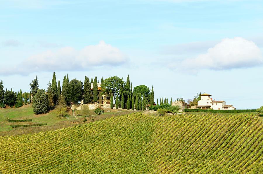 Vineyard And Farmhouse Photograph by Lisa-blue
