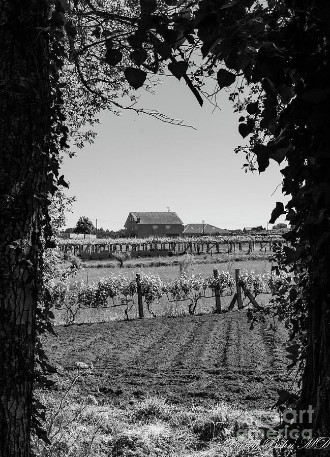 Vineyard farmhouse BW by Barry Bohn