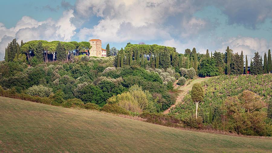 Vineyard Morning Tuscany Italy by Joan Carroll