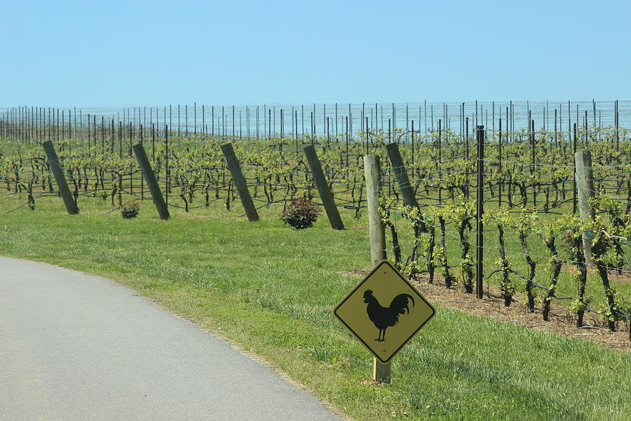 Vineyard Posts And Chicken Sign by Cathy Lindsey