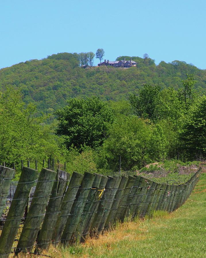 Vineyard Posts In Spring 7 by Cathy Lindsey
