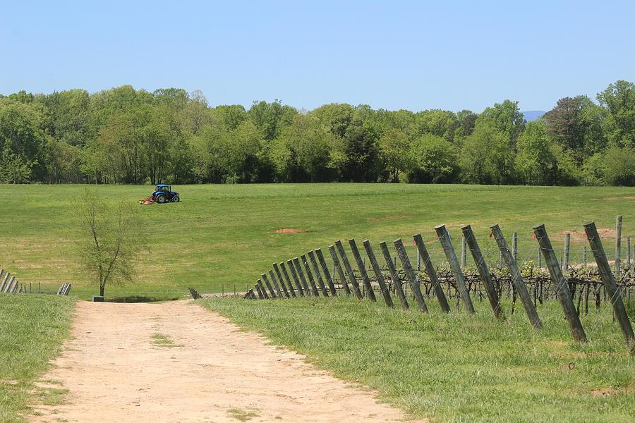 Vineyard Posts In  Spring 9 by Cathy Lindsey