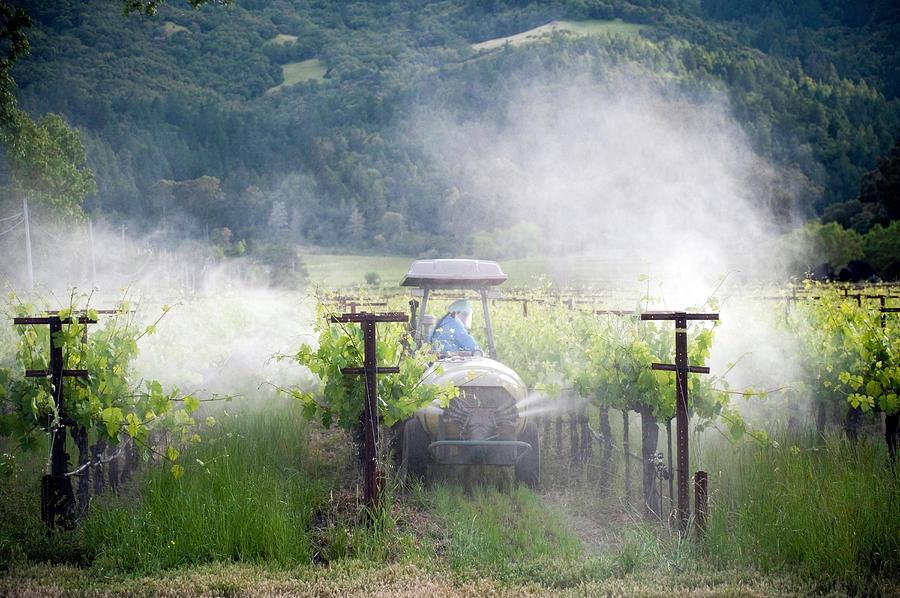 Vineyard Spraying Photograph by Philary