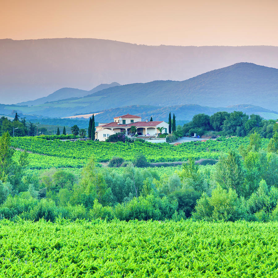 Vineyard, Villa And Rolling Hills In Photograph by Espiegle
