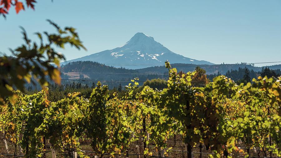 Vineyard Vista by Kristopher Schoenleber