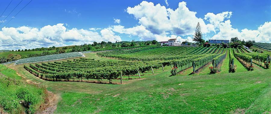 Horizontal Photograph - Vineyard, Whangarei, Northland, New by Panoramic Images
