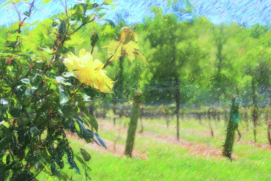 Vineyard Yellow Roses In Spring 3 by Cathy Lindsey