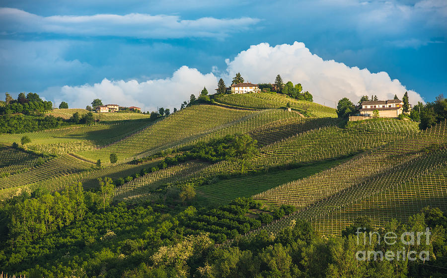 Country Photograph - Vineyards Of Langhe, Piedmont, Unesco by Javarman