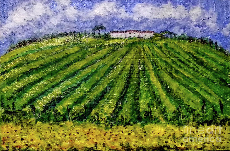 Vineyards of Tuscany by Asha Sudhaker Shenoy