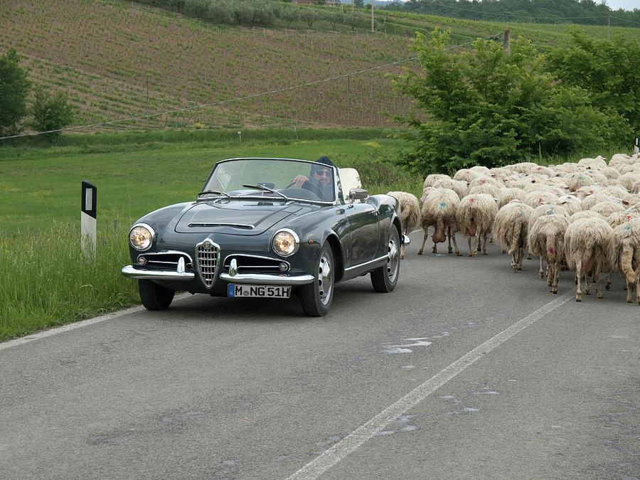 Vintage Alfa Romeo >> Vintage Alfa Romeo Giulia Tuscany