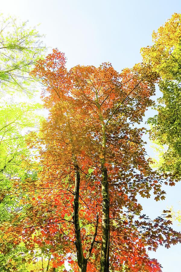 Vintage Autumn II by Anne Leven