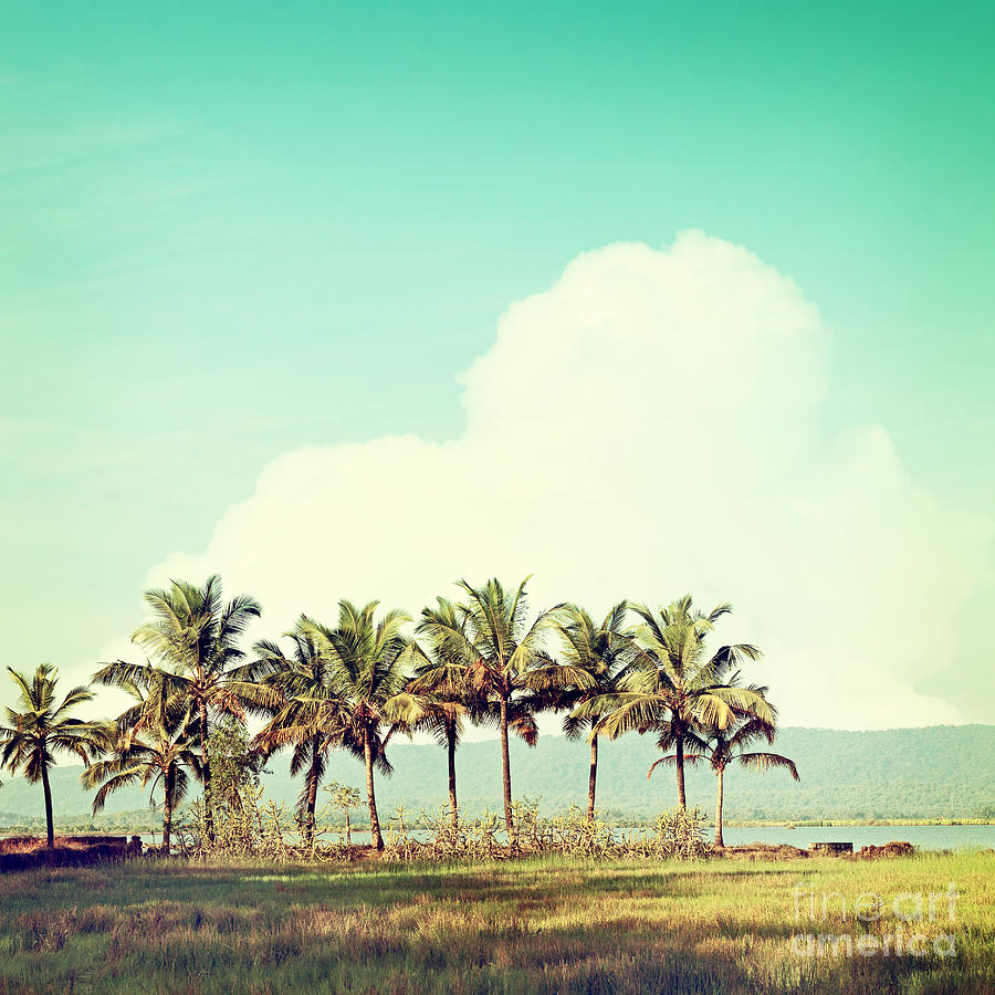 Beam Photograph - Vintage Beach Palms by Sundari