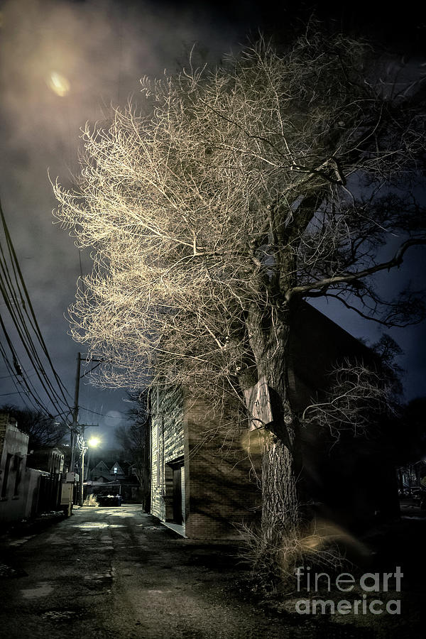 Alley Photograph - If Trees Could Talk by Bruno Passigatti
